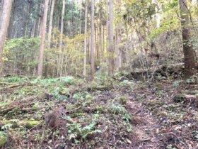 神戸の岩場 アプローチ 15