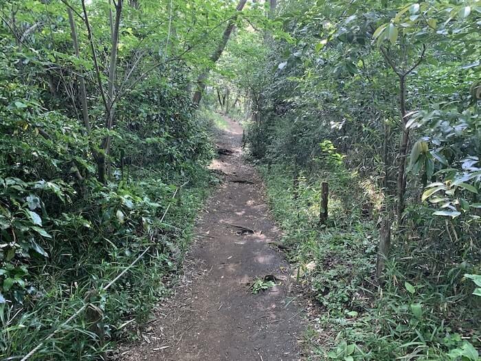 舞岡公園 登山路b