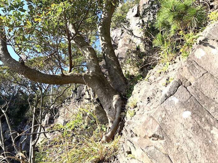 城ヶ崎 登り返し 中間部