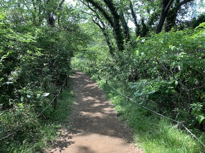舞岡公園 登山道3