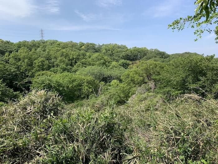 舞岡公園 森