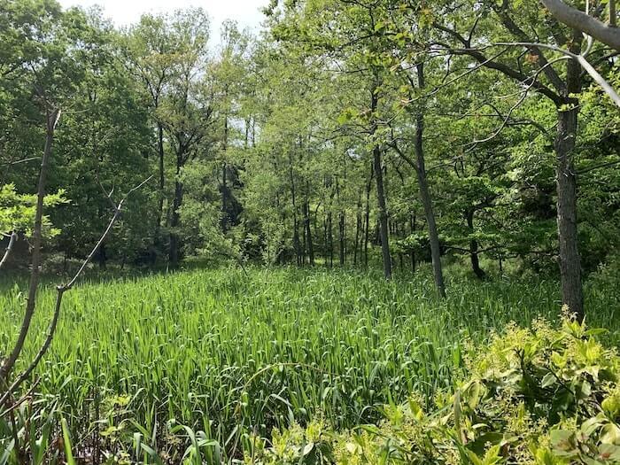 舞岡公園 湿地帯2