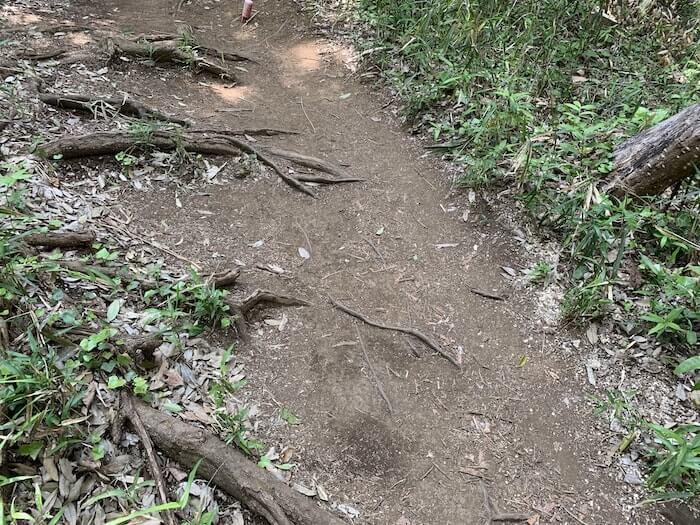 舞岡公園 登山道2