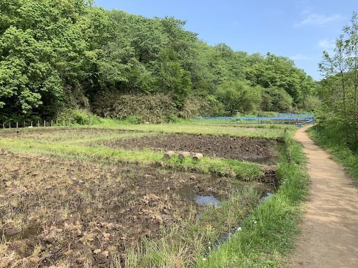 舞岡公園 水田1