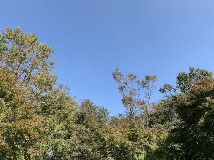 舞岡公園 秋 紅葉1