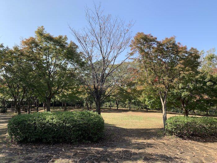 舞岡公園 秋 紅葉3