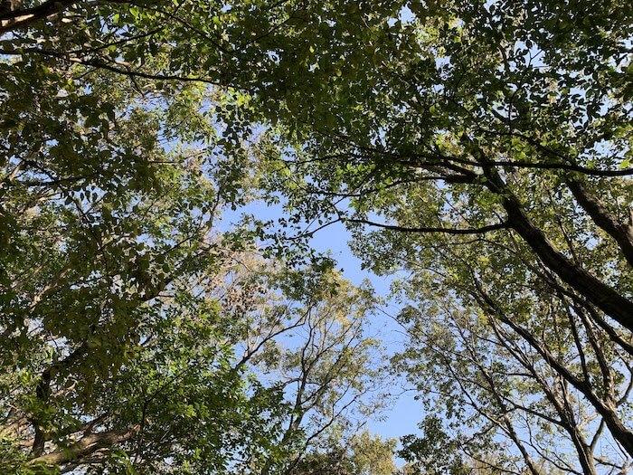 舞岡公園 秋 木漏れ日