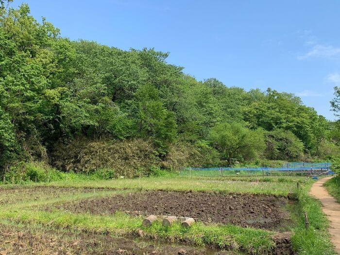 舞岡公園 水田2