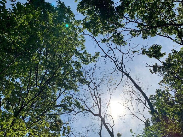 舞岡公園 春の木漏れ日